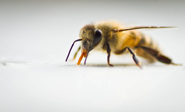 Stings and bites from insects could mean a call to the Idaho Poison Center.