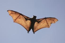 bats_lg
