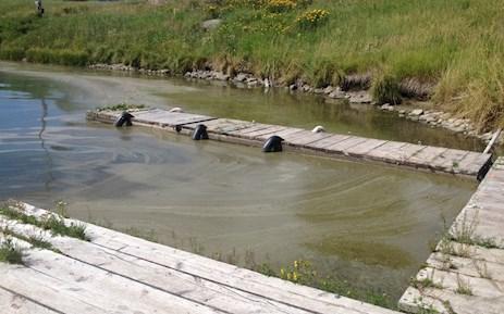henrys-lake-bg-algae