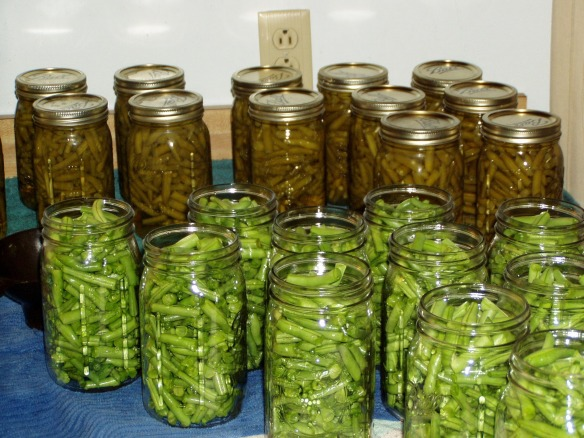 CannedGreenBeans